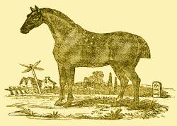 Roadster horse 1838